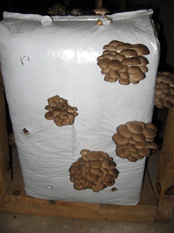 Uzgoj gljiva
